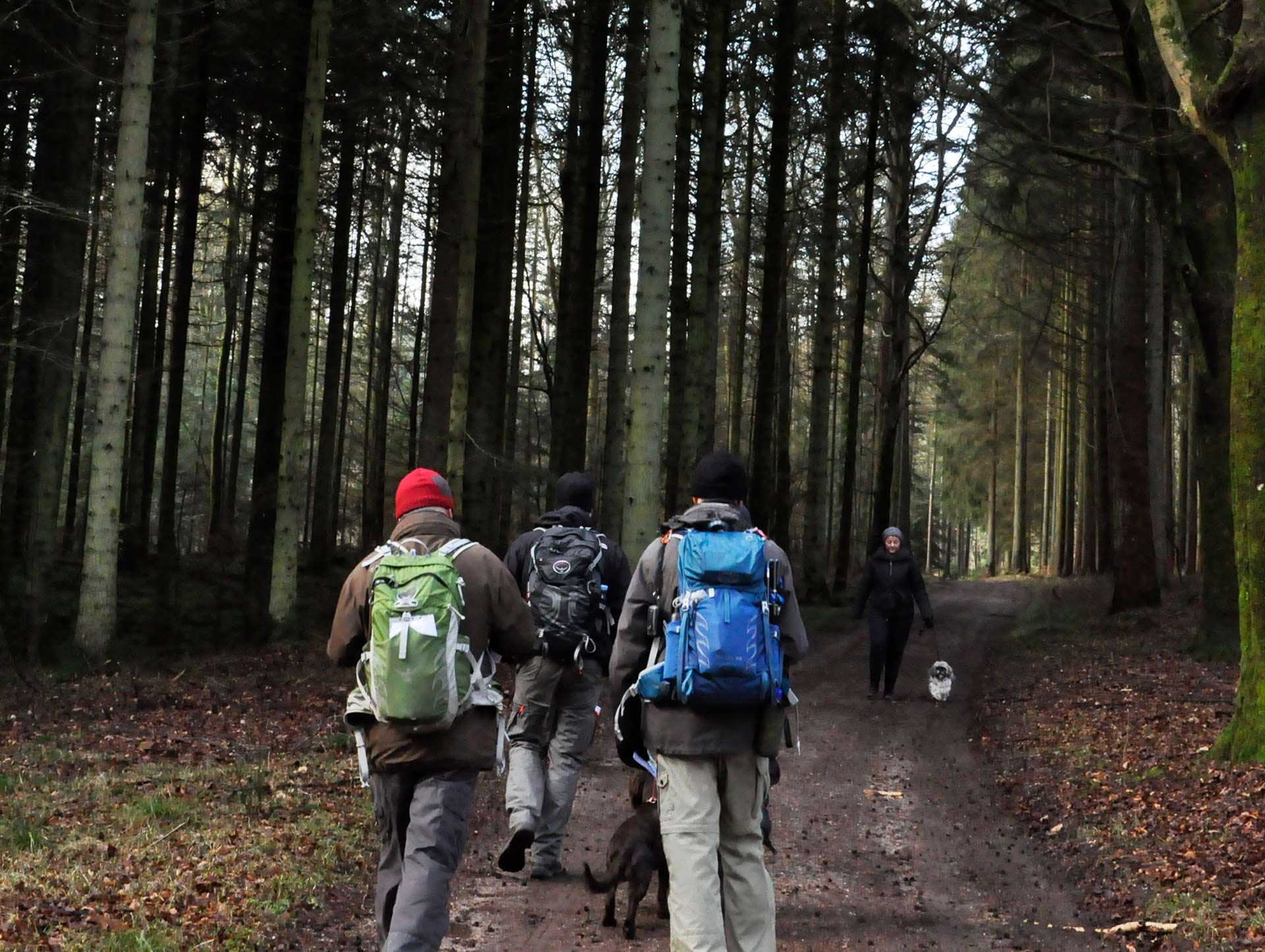 gruppe-gaar-tur-i-skoven
