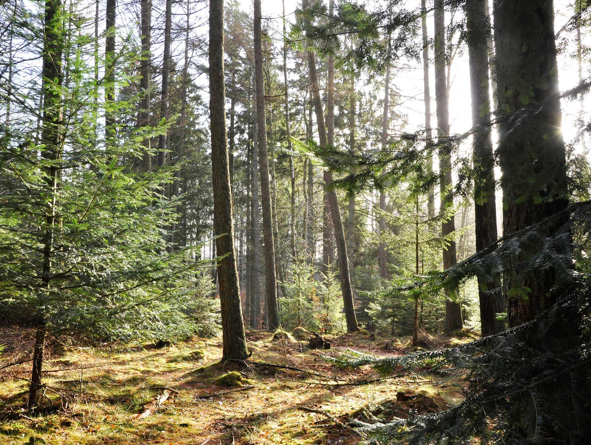skov-i-silkeborg
